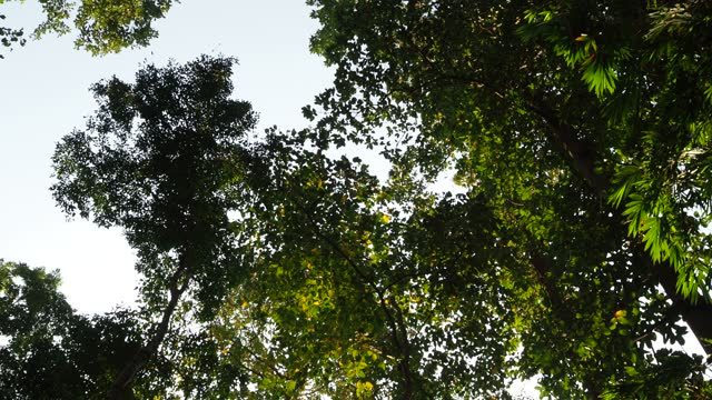 looking up tree in rainforest - named wilderness area stock videos & royalty-free footage