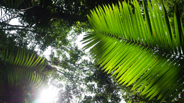 looking up tree in tropical rainforest - tropical tree stock videos & royalty-free footage