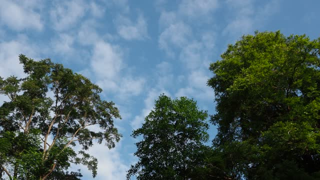 vídeos y material grabado en eventos de stock de mirando hacia arriba árbol con cielo azul y nube - low angle view