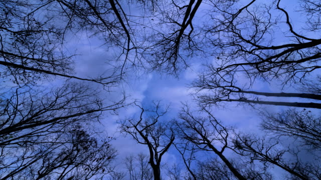 looking up tree with cloud - dead plant stock videos & royalty-free footage