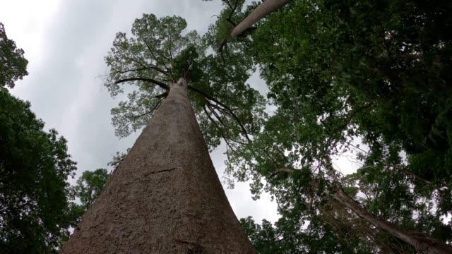 vídeos de stock, filmes e b-roll de olhando para cima árvore com céu mal-humorado - copagem