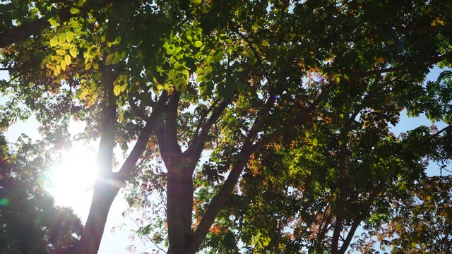 vídeos y material grabado en eventos de stock de mirando hacia arriba árbol con rayos de sol - rodear