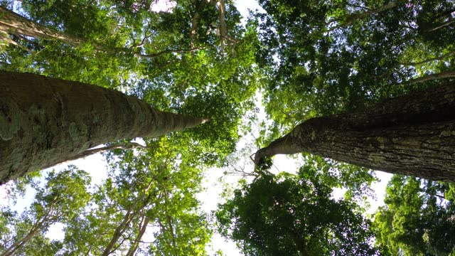 looking up tree with sunlight - tall high stock videos & royalty-free footage