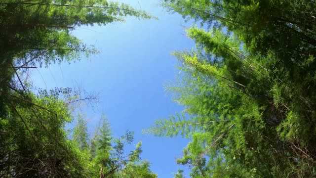 looking up trees in the rainforest - low angle view stock videos & royalty-free footage