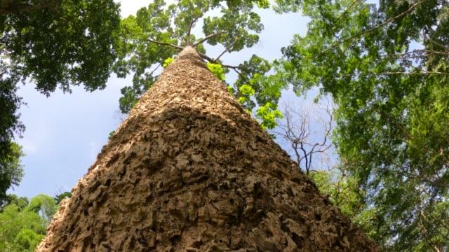vídeos de stock, filmes e b-roll de olhando para cima árvores - faia árvore de folha caduca