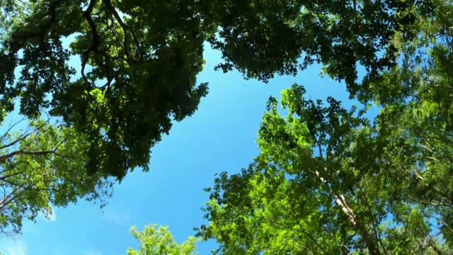 looking up trees with sunlight - copertura di alberi video stock e b–roll