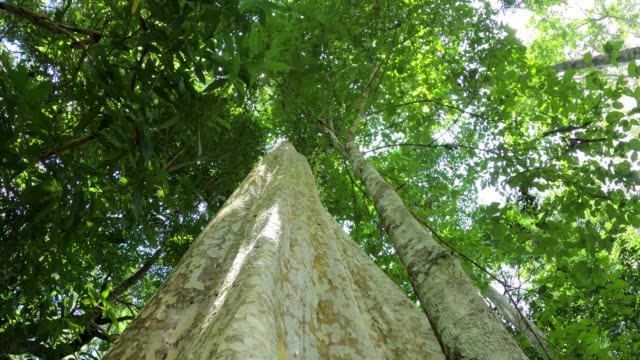 日光で見上げる - 硬木の木点の映像素材/bロール
