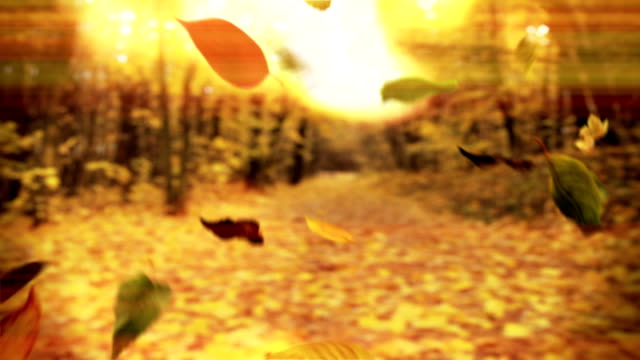 loop autumn tree leaves falling down in a park - maple leaf stock videos and b-roll footage