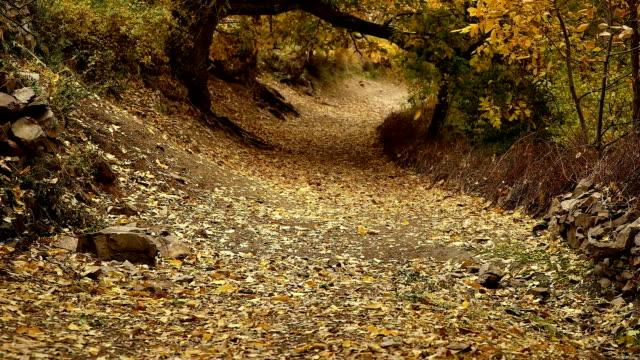 LÅNGSAM MOT. Loop höst löv faller ner i en park