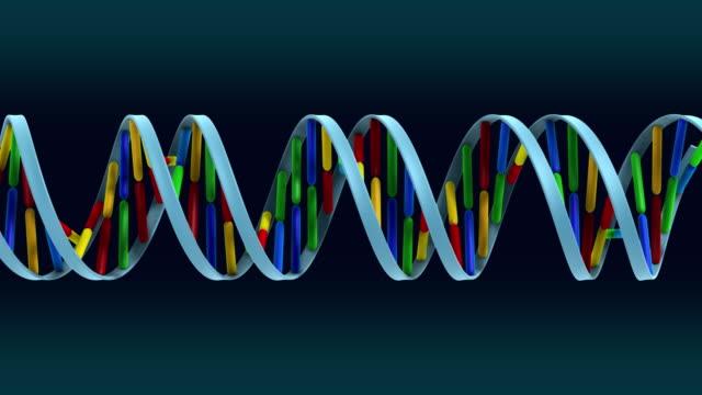 DNA loop with alpha HD