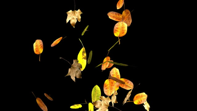 Loopable autumn leaves falling+Alpha included.