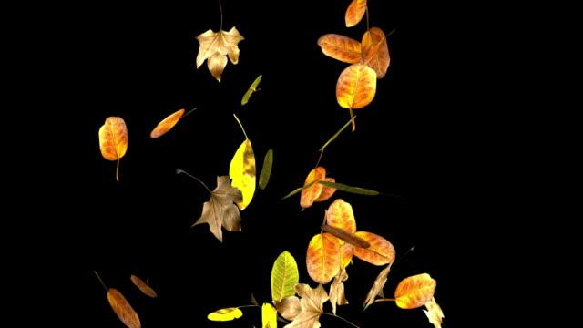 vídeos y material grabado en eventos de stock de en bucle hojas de otoño caída alfa incluido. - mate técnica de vídeo
