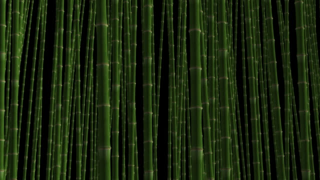 loopable bamboo forest in wind - bamboo plant stock videos and b-roll footage