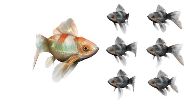 Endlos wiederholbar, Big Red Goldfisch Unterricht einige kleinere Fische