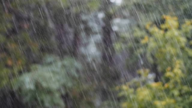 loopable close up shot of rain in the forest, rainforest, pov, selective focus, greenery, beauty in nature, springtime, autumn - shower stock videos & royalty-free footage