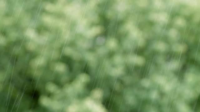 loopable nahaufnahme von regen im wald mit audio zur verfügung. regenwald, pov, selektiver fokus, grün. regen hart. überschwemmungen im frühling, herbst, sommer. umweltfragen. - audio available stock-videos und b-roll-filmmaterial