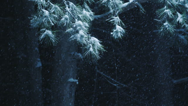 loopable close up shot of snow falling in a pine woodland, dense snowfall, and snow covered trees. winter pov. snowing hard. environmental issues. - pinaceae stock videos & royalty-free footage