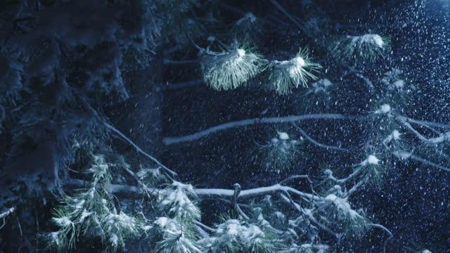 vidéos et rushes de plan rapproché loopable vers le haut de projectile de neige tombant dans un bois de pin, chutes de neige denses, et arbres couverts de neige. pov d'hiver. il neige fort. questions environnementales. - neige fraîche