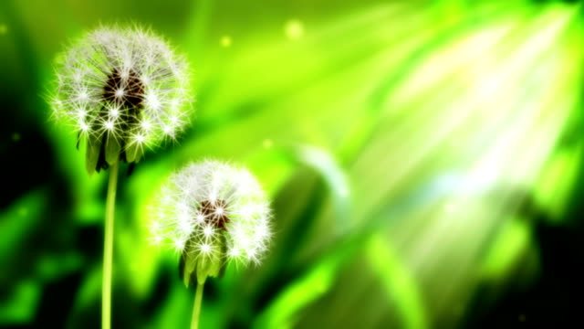 loopable dandelion background - translucent stock videos & royalty-free footage