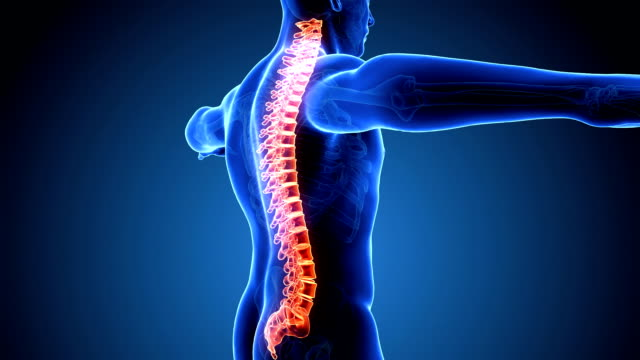 loopable human spine scan - animal body part stock videos & royalty-free footage
