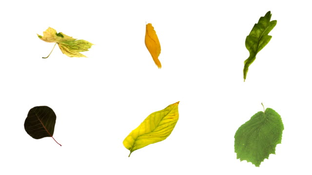 loopable leaves + matte (6in1) - leaf stock videos & royalty-free footage