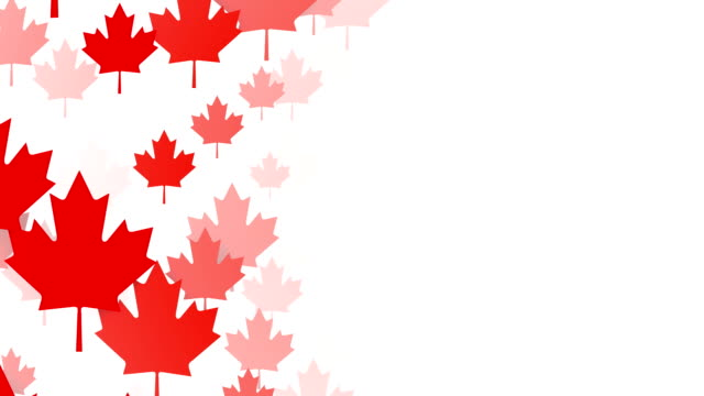 Loopable Maple Leafs over White Background, Canadian Flag, Copy Space