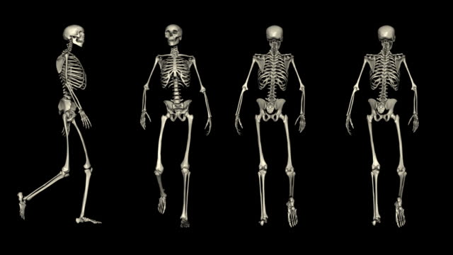 loopable, postures, four views of walking skeleton - posture stock videos and b-roll footage