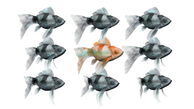 loopable, red goldfish leading from the center - standing out from the crowd stock videos & royalty-free footage