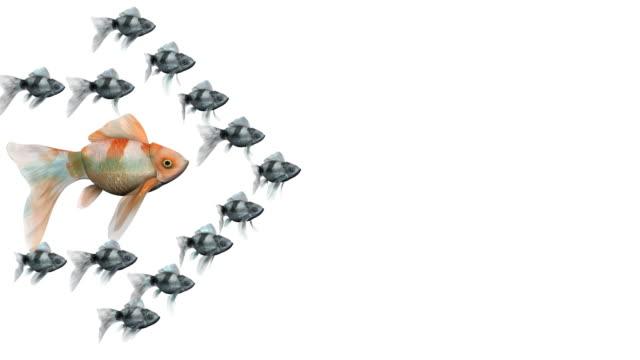 vídeos y material grabado en eventos de stock de en bucle, rojo carpa dorada rodeado por una flecha de goldfishes negro - salirse de lo normal