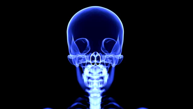 loopable x-ray skull blue - midbrain stock videos & royalty-free footage