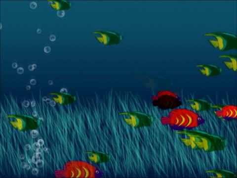 Endlosschleifen Fisch NTSC