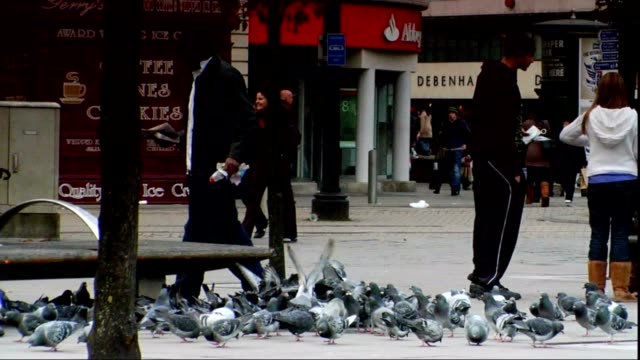 loose group of common feral rock pigeons walking in city plaza foraging for food zo ws loose group of pigons people walking bg - foraging stock videos & royalty-free footage