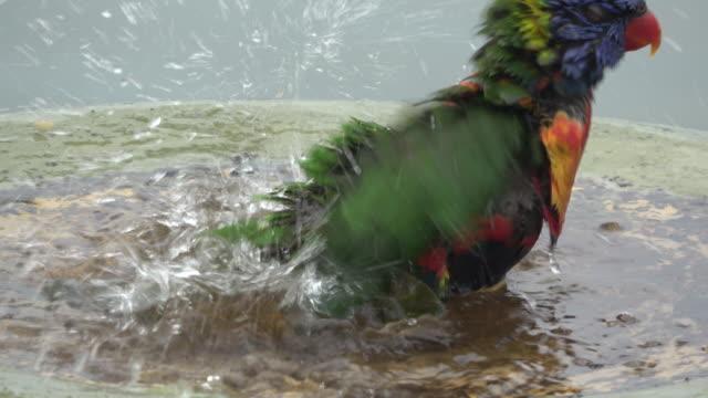 stockvideo's en b-roll-footage met vogels - water bird