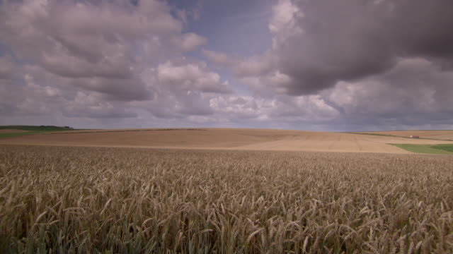 lorries drive along a distant road behind golden fields of wheat in the somme region of france. - north stock videos & royalty-free footage