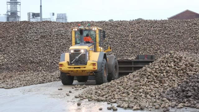 a lorry pushes sugar beet in to a hopping machine at the british sugar plc factory in bury st edmunds uk on wednesday oct 21 a pipeline carrying... - bury st edmunds stock videos & royalty-free footage