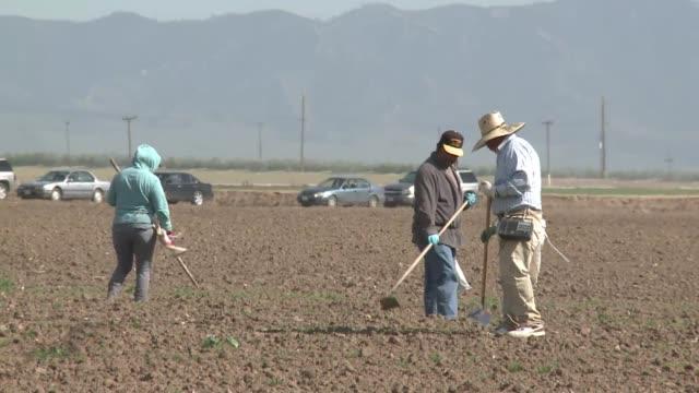 vídeos y material grabado en eventos de stock de los agricultores de california enfrentan una escasez de peones debido al aumento de deportaciones y a los controles fronterizos mas estrictos que... - ee.uu