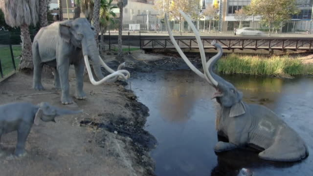 ktla los angeles ca us aerial views of the la brea tar pits and museum on tuesday august 27 2019 - animal representation stock videos & royalty-free footage