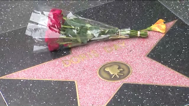 stockvideo's en b-roll-footage met ktla los angeles ca us bunch of red roses on doris day star at walk of fame on thursday may 13 the anniversary of her death - hollywood walk of fame