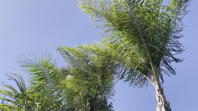 los angeles, ca, u.s. - trees moved by wind on windy day in north hollywood, los angeles. on tuesday, february 16, 2021. - palm tree stock videos & royalty-free footage