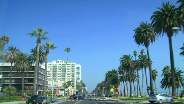 los angeles. california - palm tree stock videos & royalty-free footage