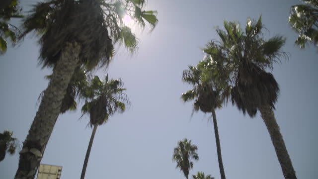 los angeles - venice beach - venice beach stock videos and b-roll footage
