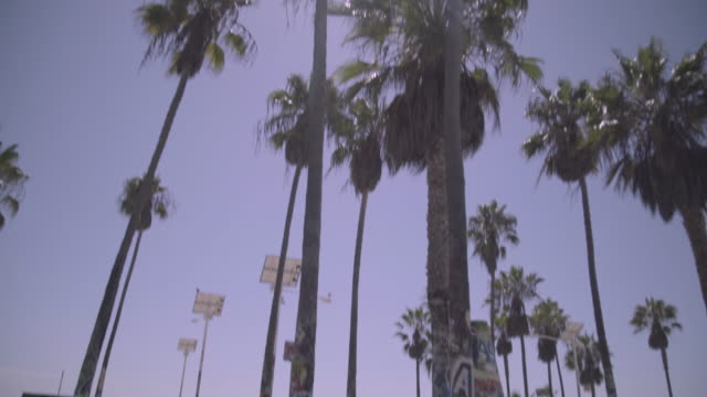los angeles - venice beach - venice california stock videos & royalty-free footage
