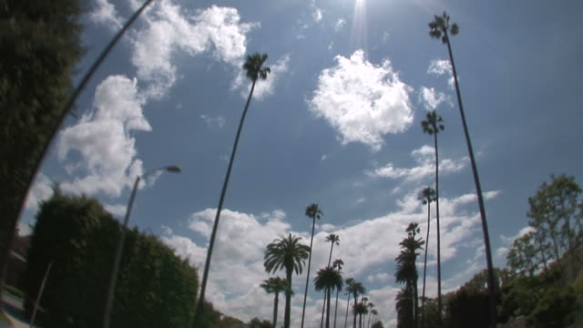 los angelesview from a moving car in los angeles united states - palma nana video stock e b–roll