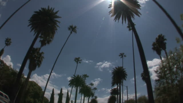 los angelesview of beverly hills from a moving car in los angeles united states - fan palm tree stock videos & royalty-free footage