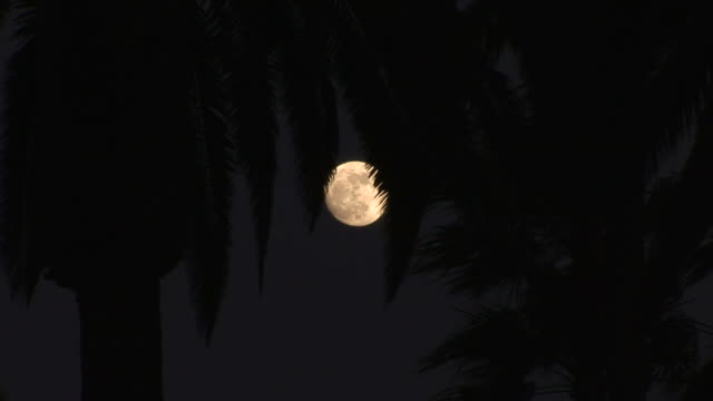 los angelesview of moon in los angeles united states - fan palm tree stock videos & royalty-free footage