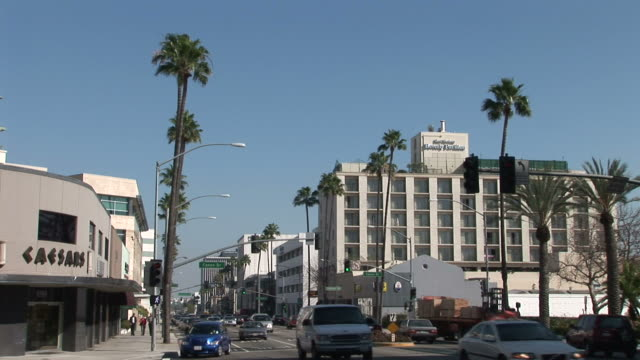 los angelesview of wilshire boulevard in los angeles united states - fan palm tree stock videos & royalty-free footage