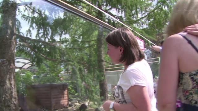 vídeos y material grabado en eventos de stock de los animales del zoo de moscu consumen unos 300 kilos de frutas y vegetales cada dia asi que se veran afectados por la decision de rusia de suspender... - ee.uu