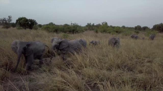 los cazadores furtivos han amenazado por largo tiempo a los animales del parque nacional mas grande el oeste de africa pendjari al norte de benin - benin stock videos and b-roll footage