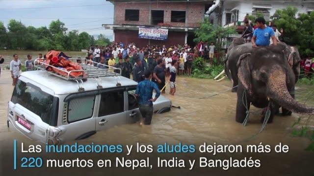 los elefantes llegaron al rescate de un grupo de turistas en la reserva nacional nepalesa de chitwan - reserva animal stock videos and b-roll footage