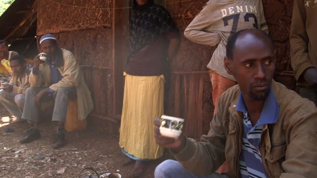 stockvideo's en b-roll-footage met los granos de cafe que crecen salvajes en etiopia hacen mas que alimentar a los monos babuinos tambien dan un modo de vida a los agricultores... - agricultura